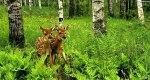 Wycieczka do lasu.